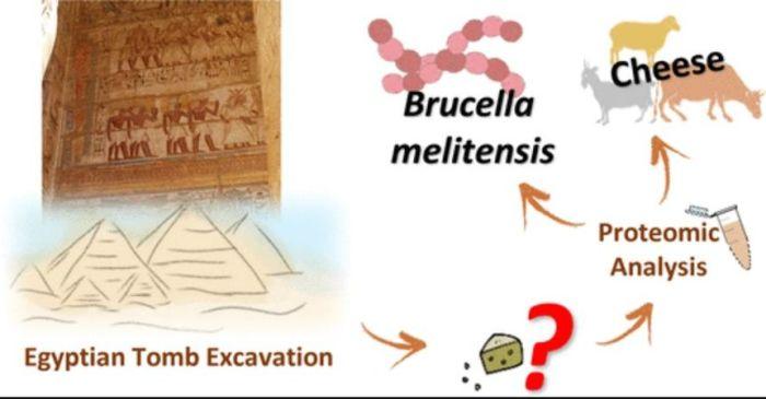 Иллюстрация к статье о проведенных исследованиях в журнале  Analytical Chemistry. / Фото: www.pubs.acs.org